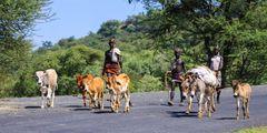 Hirten mit Herde unterwegs...