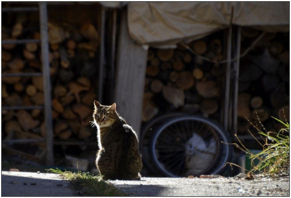 * histoire d'un chat au soleil *
