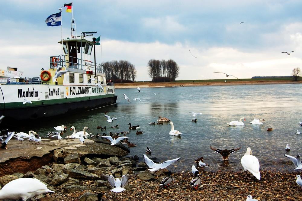 Hitdorf Hafen