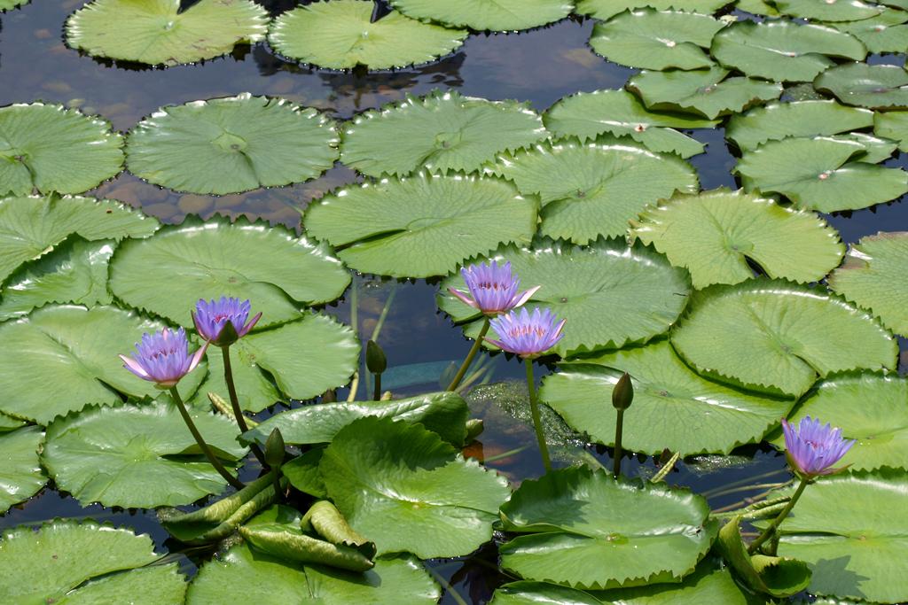 HK Flower