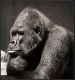 hmmm.... ach wie schön wär das wenn.....     ( Gorilla )