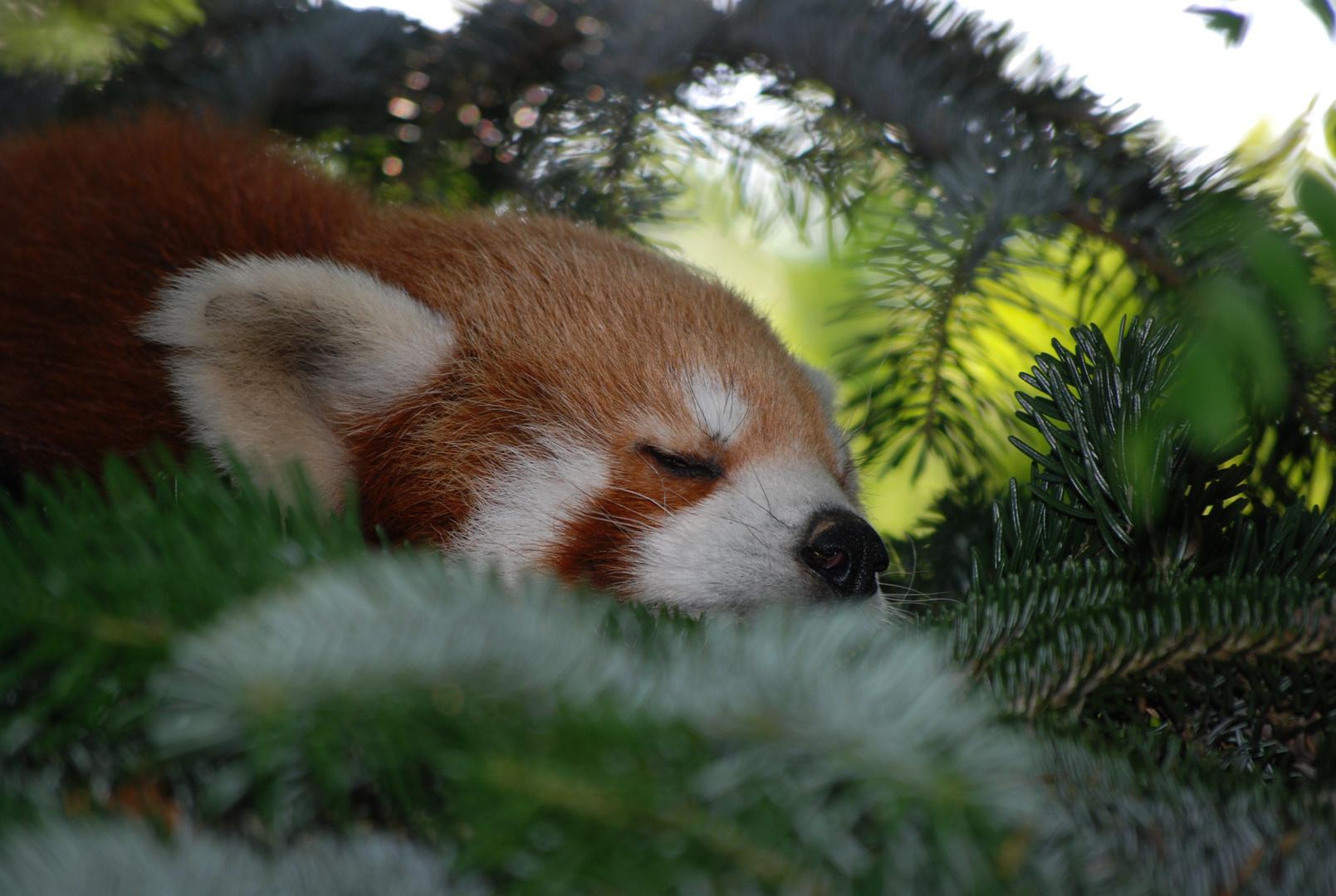 ho tanto sonno...