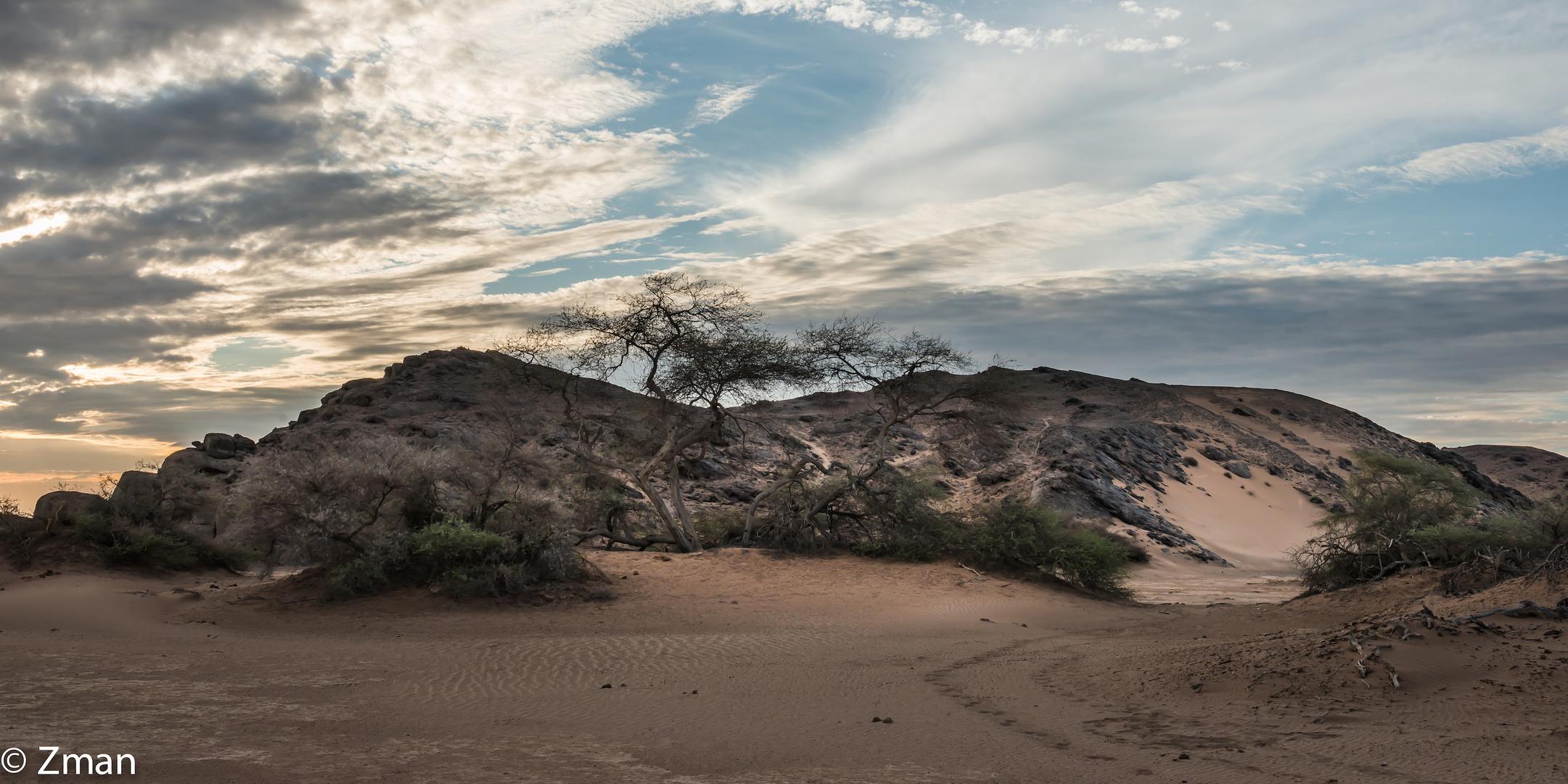 Hoanib Basin Acacia Trees 01