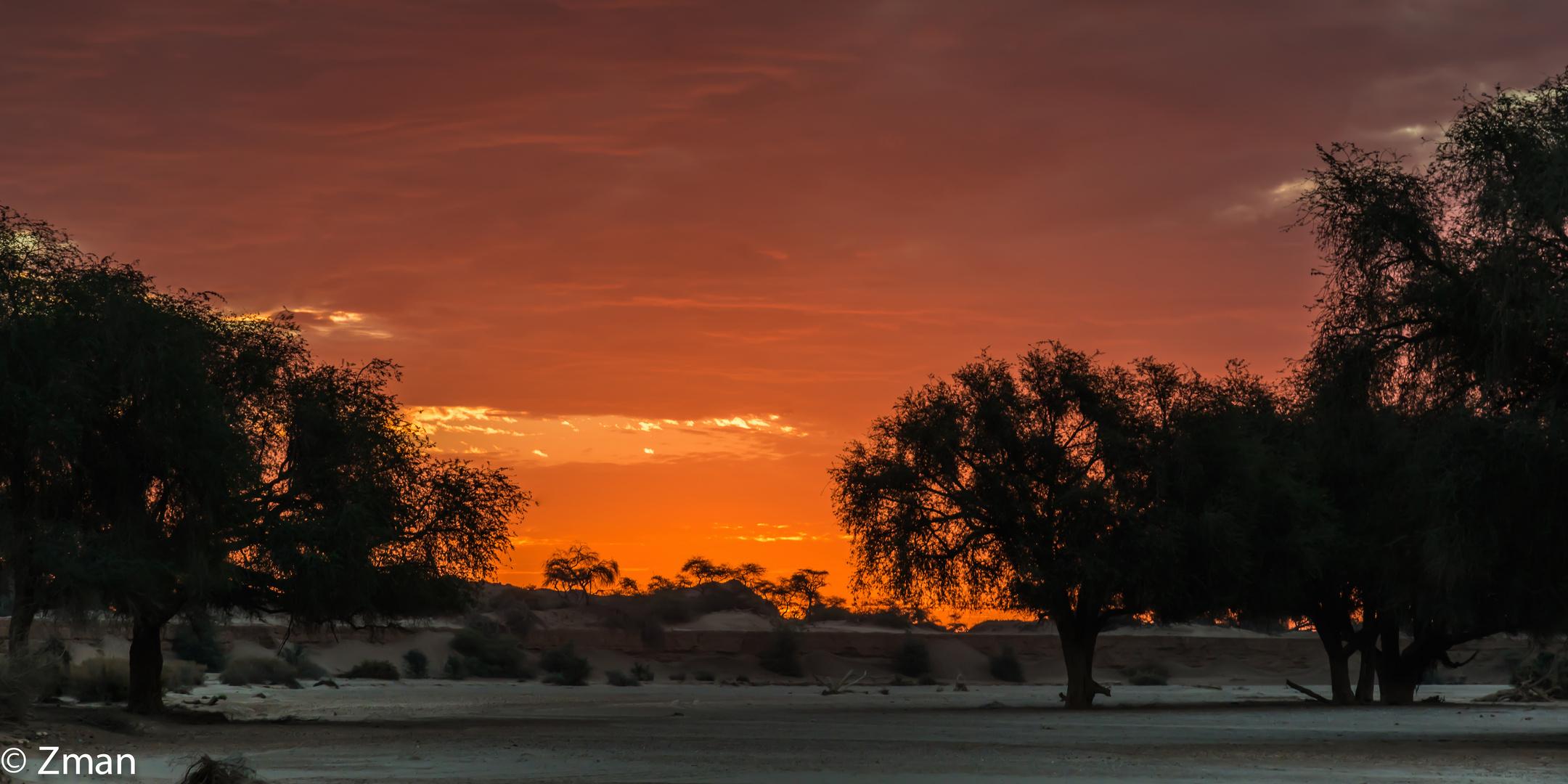 Hoanib Basin Acacia Trees 05