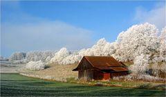 hoary hut
