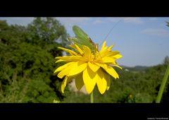 hoch auf der gelben Blume...