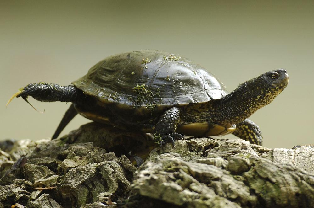 """""""Hoch das Bein"""" oder """"Deeeeeeehn - Übungen einer Schildkröte"""""""