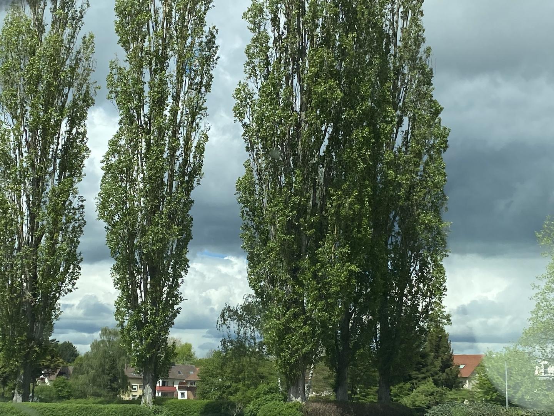 Hoch gewachsene Bäume
