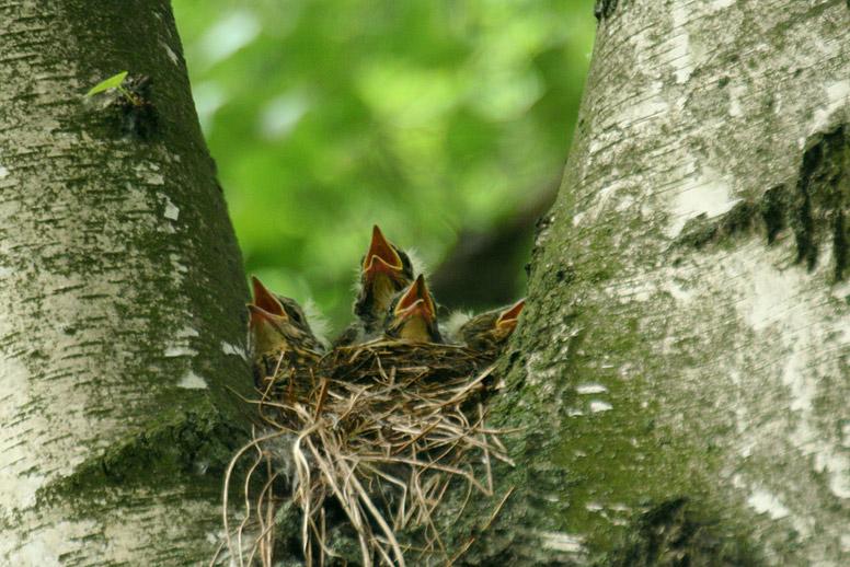 Hoch oben im Baum.... Teil 2