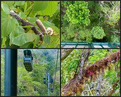Hoch über dem Regenwald
