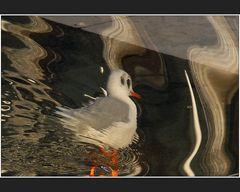 Hoch-Wasservogel