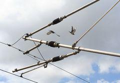 Hochgespannter Vogelflug