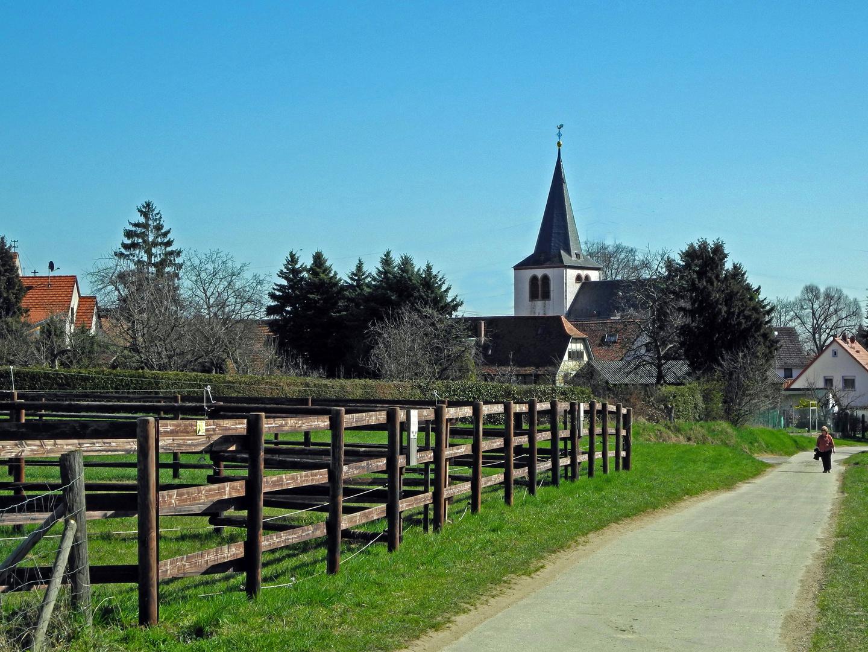Hochheim-Massenheim: ...auf dem Panoramaweg nach Massenheim