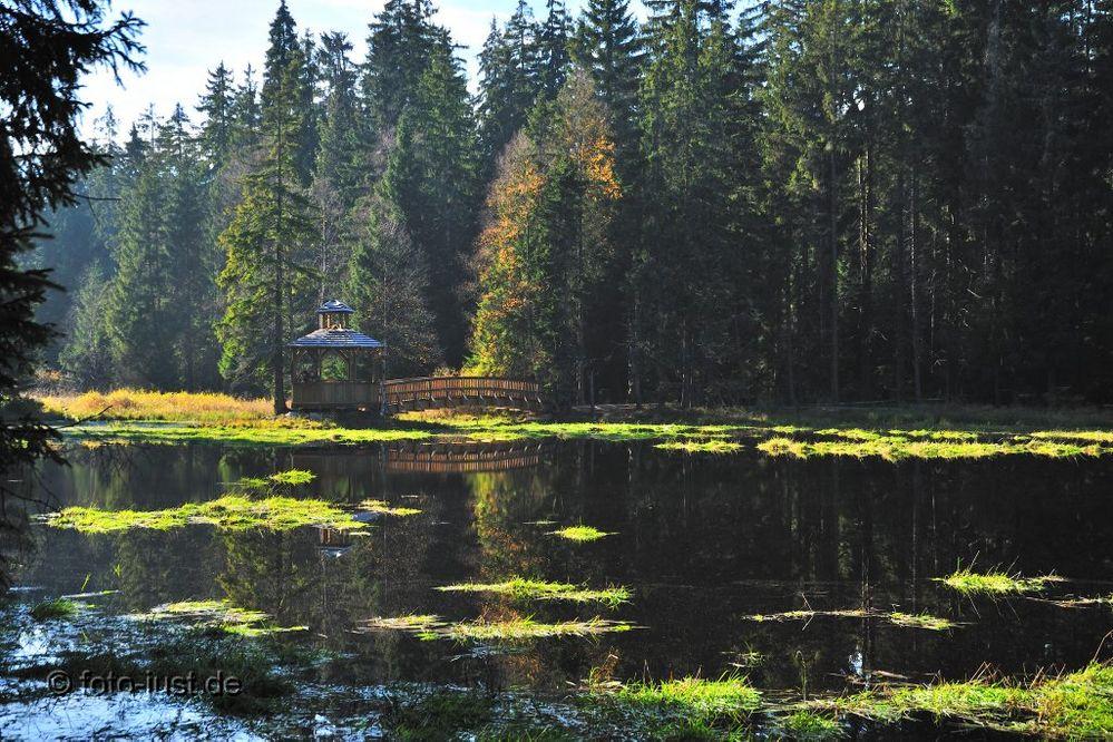 Hochmoor bei Kladska ( Glatze ) - Westböhmen - Tschechien