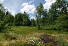 Hochmoor im Odenwald