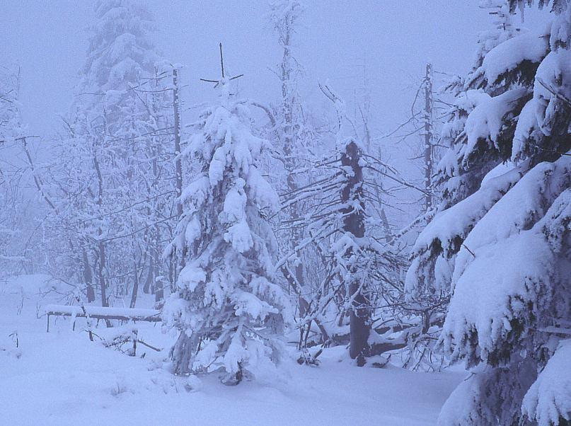 Hochmoor im Winter
