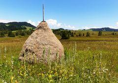 Hochmoor-Landschaft