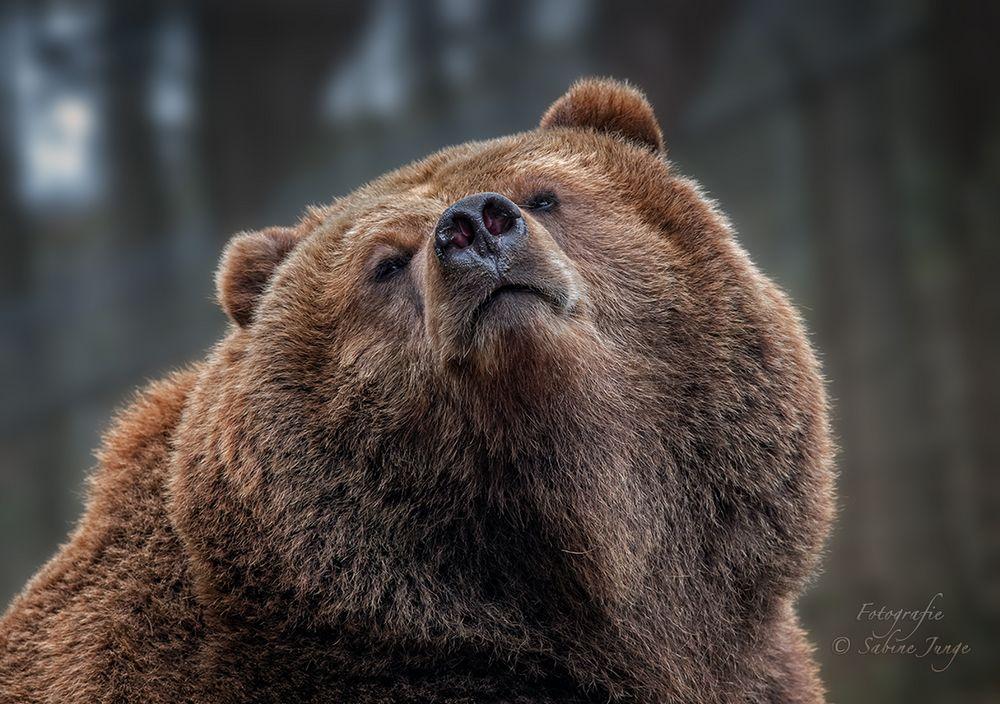 Hochnäsiger Nasenbär ;-)