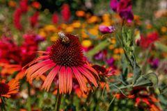 Hochsommerliche Pracht im Blumenbeet