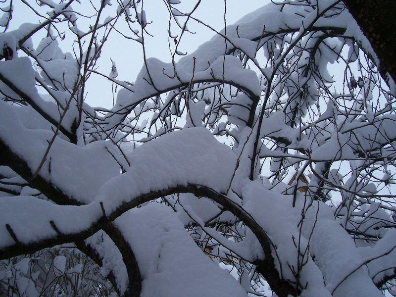 Hochstapler - Schnee