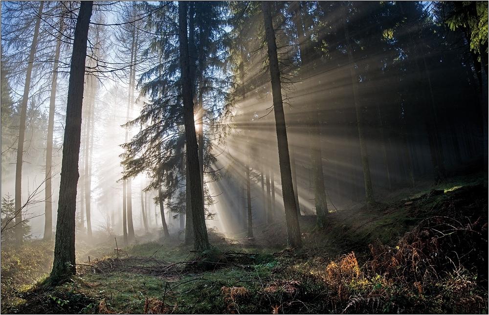 Hochwald im Dezemberlicht