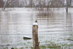 Hochwasser am 09.02.2021 ..120_4454