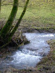 """""""Hochwasser"""" am Bach"""