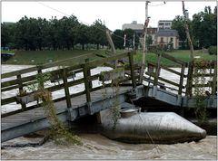 ... Hochwasser am Rhein ...