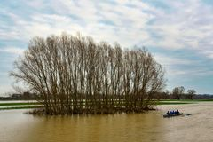 Hochwasser am Rhein