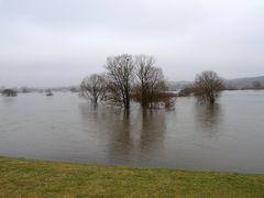 Hochwasser an der Elbe. Immer....