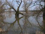 Hochwasser an der Oder 2