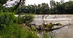 Hochwasser führende Mur bei Stübing!