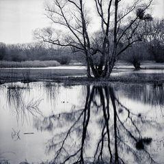 Hochwasser im Grosswoerth