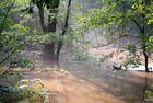 Hochwasser im Wald in der Nähe der Spree