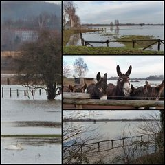 Hochwasser Steveraue Olfen