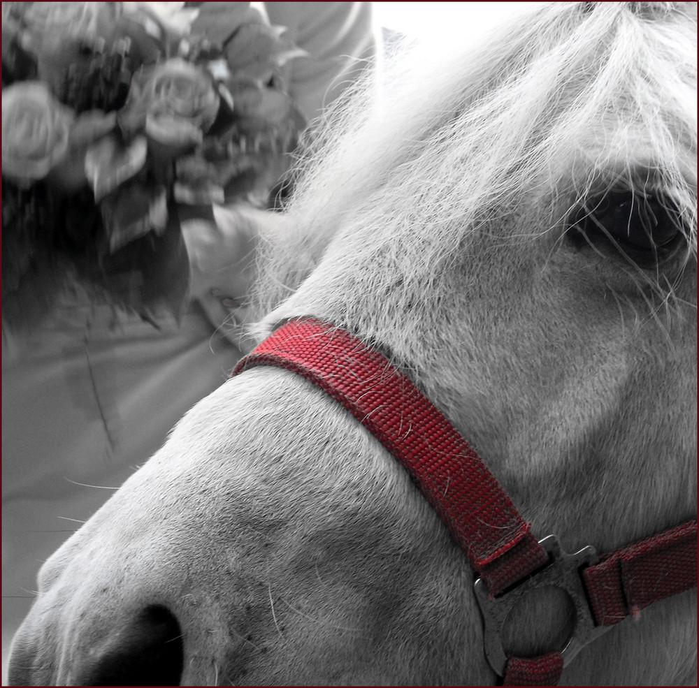 HOCHzeits Pony