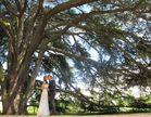 Hochzeitsbaum................