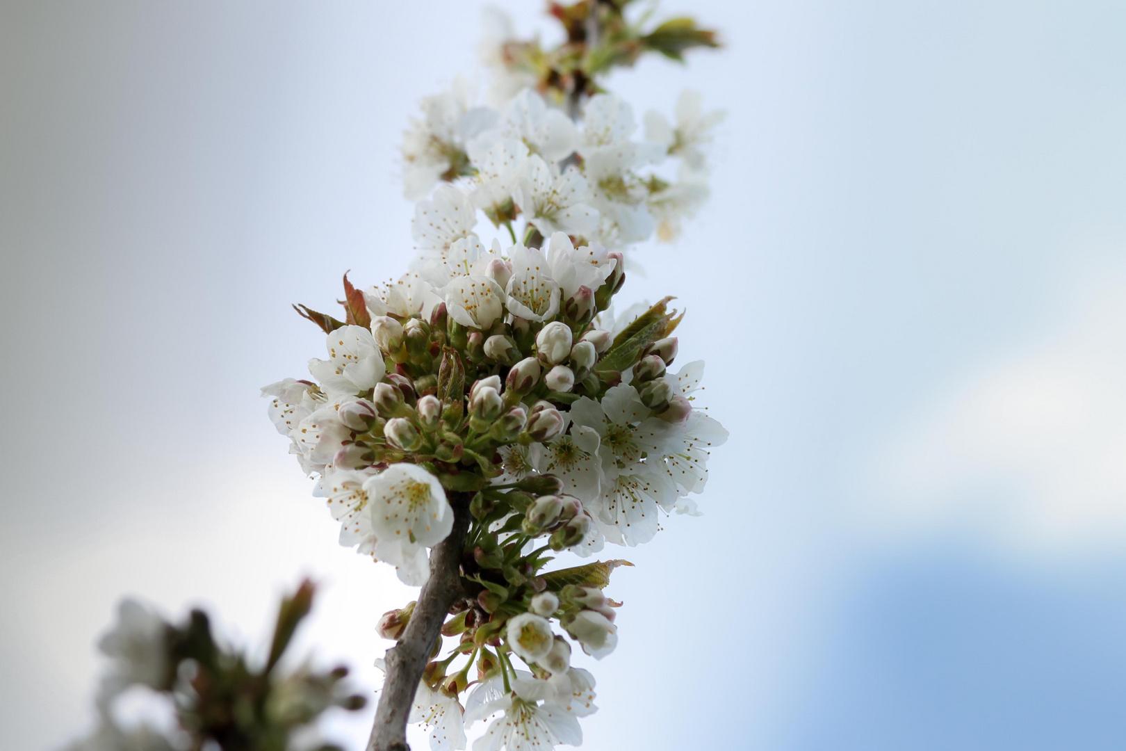 Hochzeitsstrauss Foto Bild Pflanzen Pilze Flechten Baume