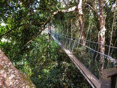 Höchster Regenwald-Wanderweg