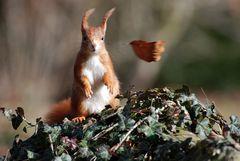 Hörnchen auf der Luvseite ;-)