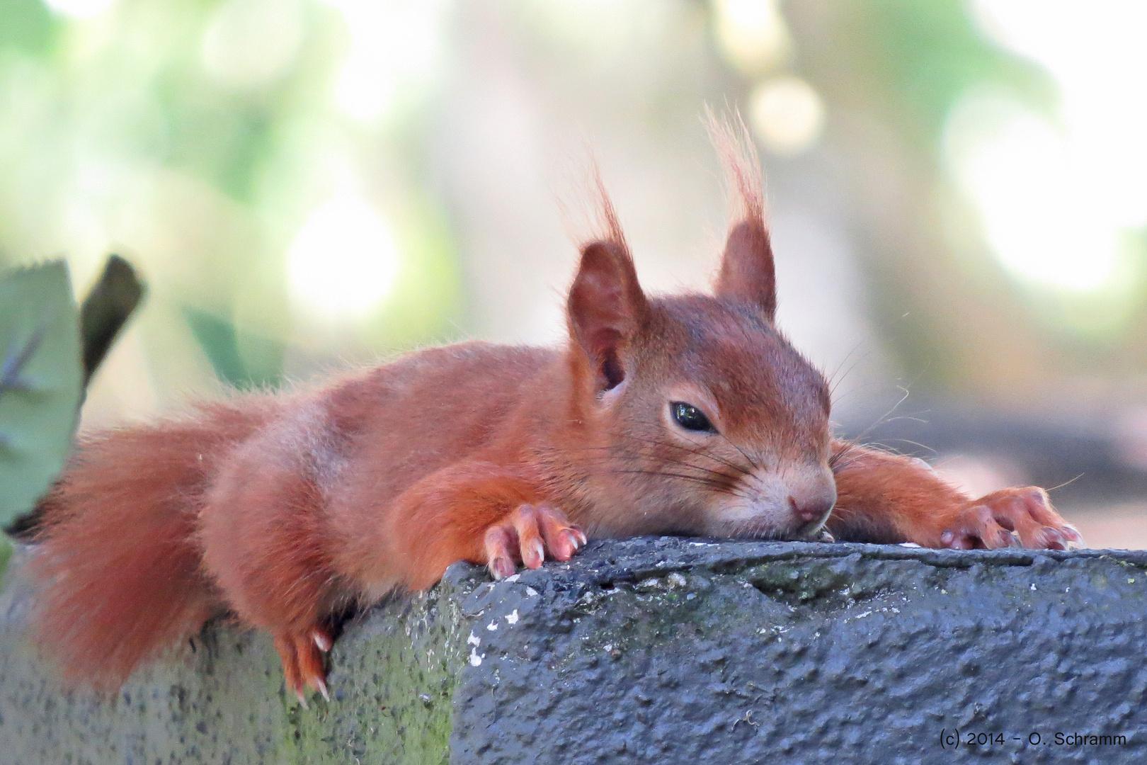 Hörnchen-Hitze