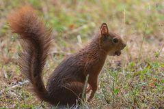 Hörnchen im Regen_01.09.2020