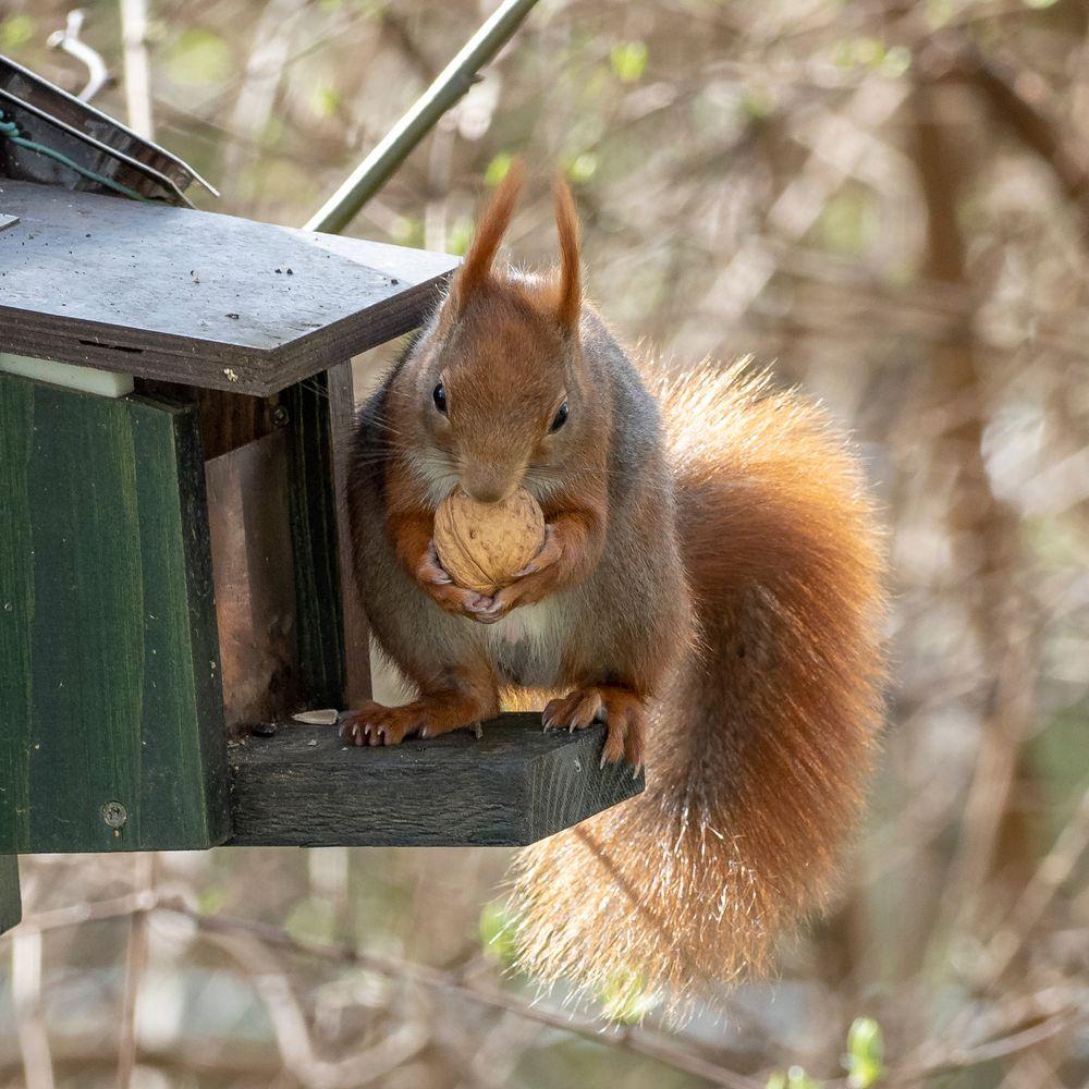 Hörnchen-Imbiss
