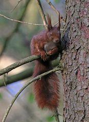 Hörnchen macht Pause