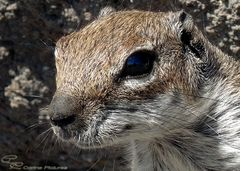 Hörnchen Portrait