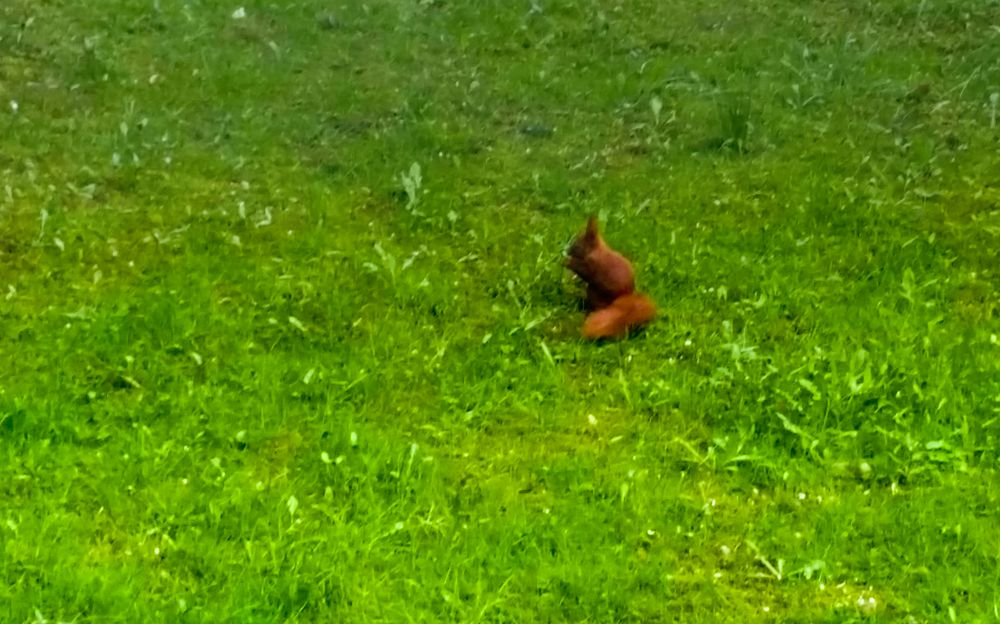 Hörnchenkind