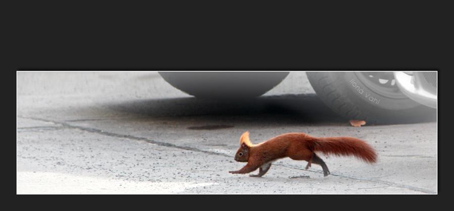 Hörnchenstripe
