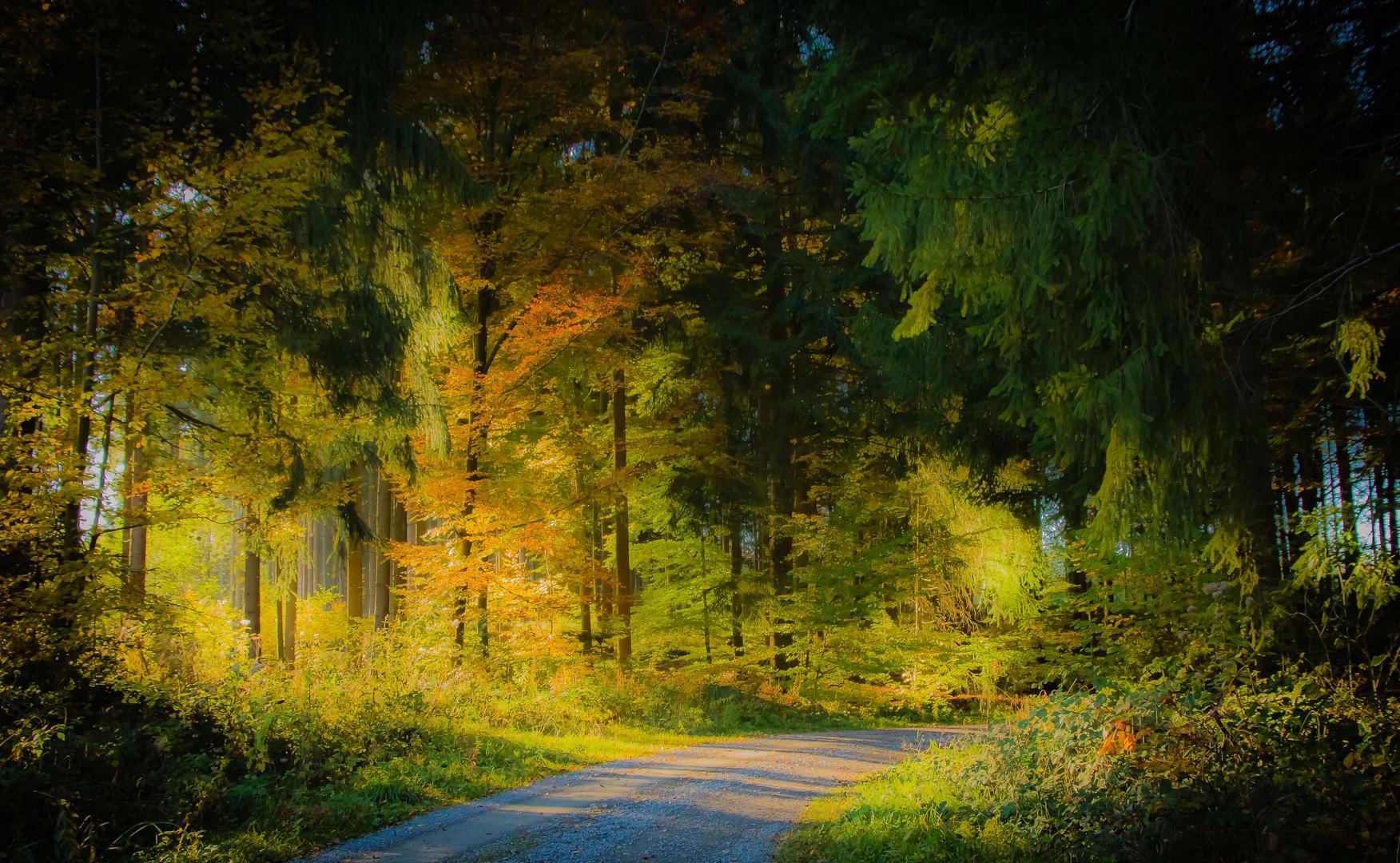 Hörschbachtal im Herbst