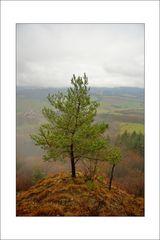 Hörselbergbaum im Winter ohne Schnee