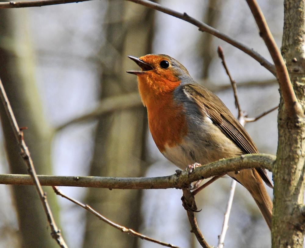 Hört ihr Freunde in Wald und Flur - endlich ist es Frühling